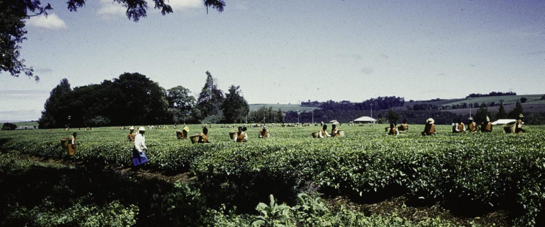 landarbeiders scaled