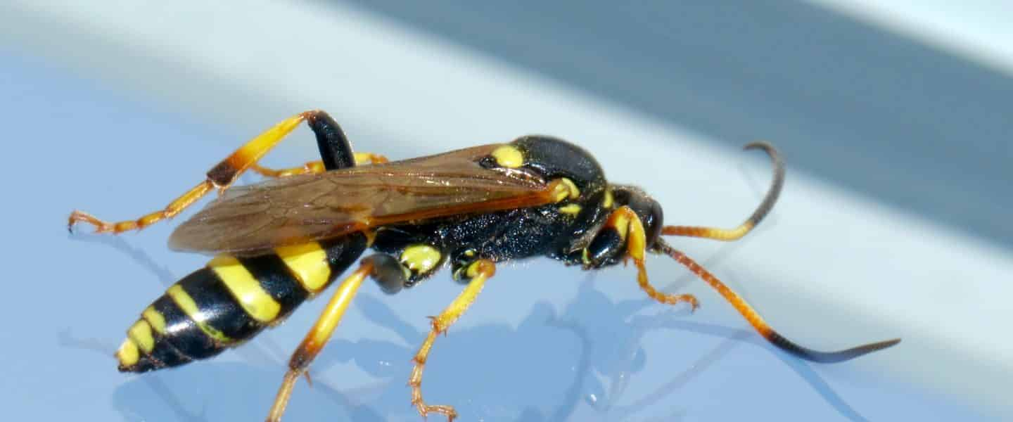yellow and black wasp on white surface