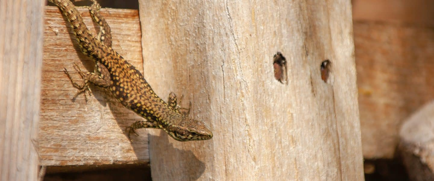 brown lizard on brown wooden surface