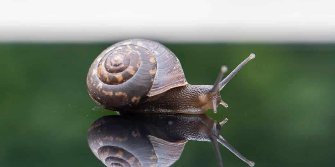 brown snail on green grass during daytime