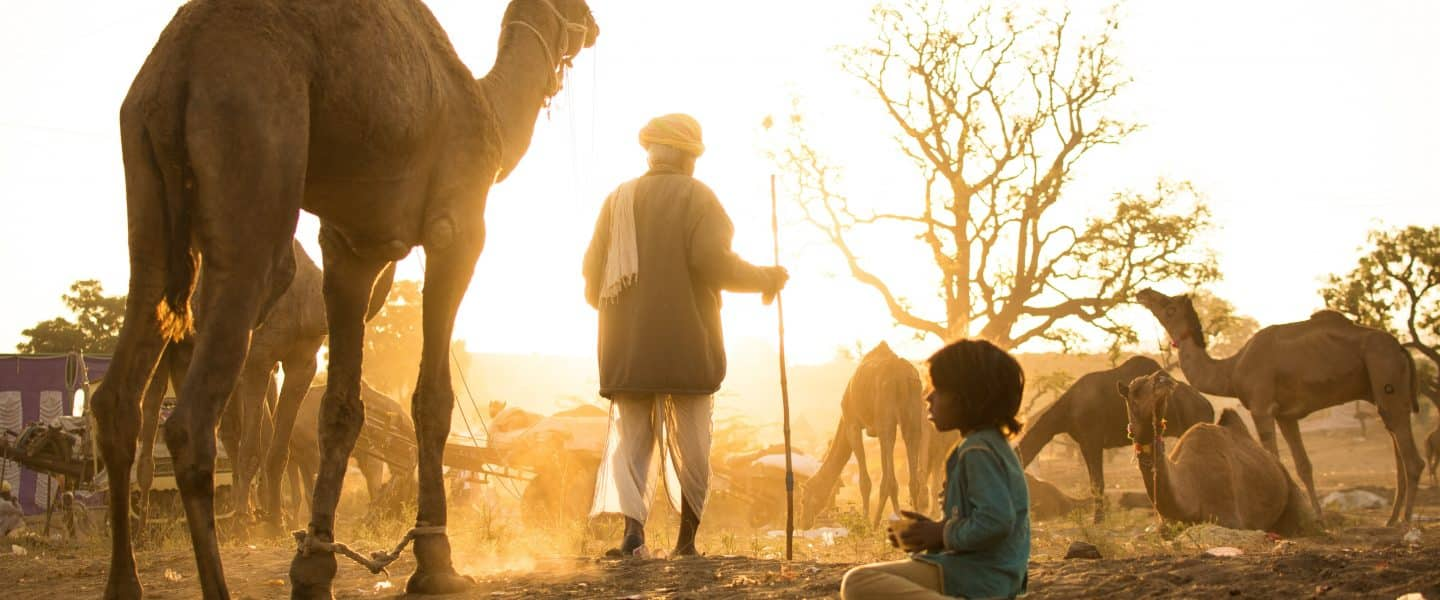 man and boy standing and sitting beside camels at daytime