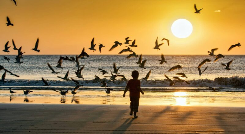 silhouette of man walking on beach with birds flying during sunset