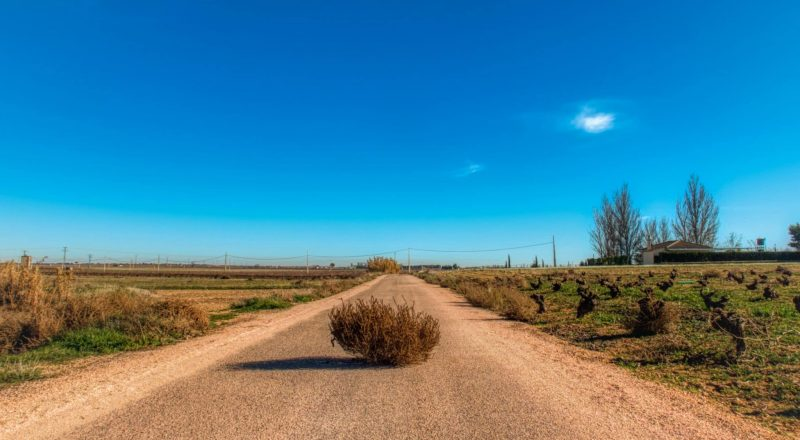 tumbleweed in the middle of the road between field during day