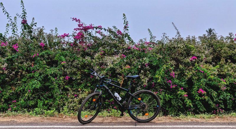 black bicycle parked beside pink flowers during daytime